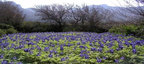 Tilos' Ecological Park