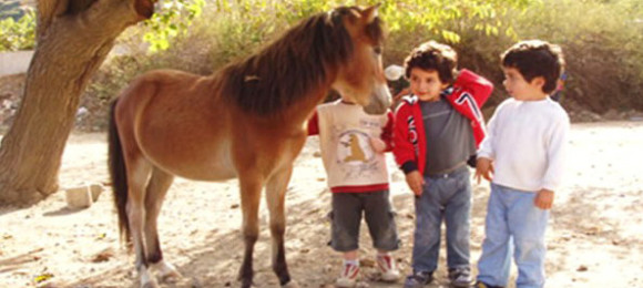 Skyrian horses