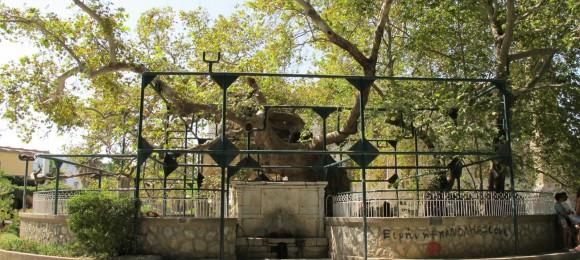 Hippocrates' tree - Kos